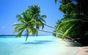 coconut tree on tropical beach